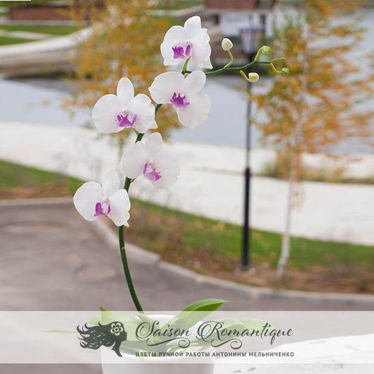 Интерьерные композиции ручной работы. Ярмарка Мастеров - ручная работа. Купить Орхидея Фаленопсис в горшке. Handmade. Орхидея, белый цветок