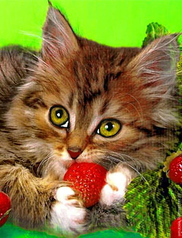 Картинки котики с фруктами стала после