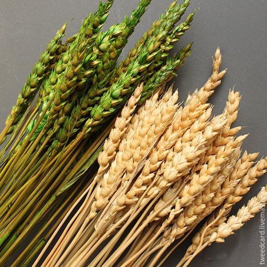 Букет из колосьев пшеницы своими руками 49