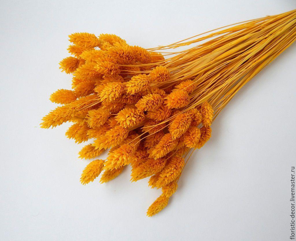 Купить канареечник (фалярис) тонированный сухоцвет букетик