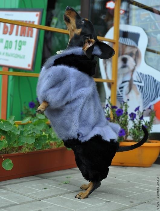 Комбинезон для собачек,женский. Из меха голубой норки и стрижки в чёрном,комбинированный в цвете. Застёжка на кнопки. Капюшон с опушкой из так же из меха голубой норки и с кнопкой для удержания капюшона. На баске кружево. Размер 14.