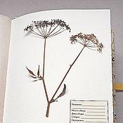Канцелярские товары handmade. Livemaster - original item Album for a herbarium Sunny day (A4, 25 plants). Handmade.
