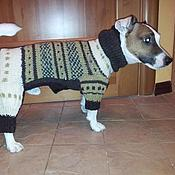 Для домашних животных, handmade. Livemaster - original item Jumpsuit for Jack Russell Terrier