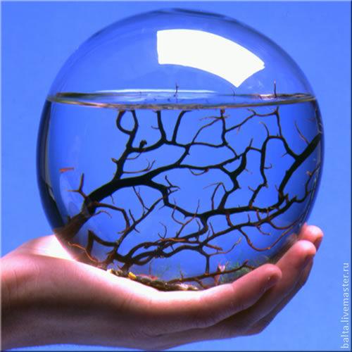замкнутая биосфера своими руками