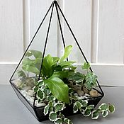 Цветы и флористика handmade. Livemaster - original item The Floriana geometric Pyramid with fern and ivy. mini garden. Handmade.
