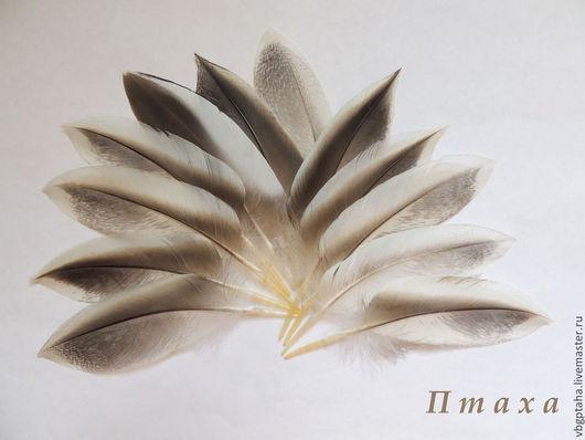 Другие виды рукоделия ручной работы. Ярмарка Мастеров - ручная работа. Купить Перья утки №1. Handmade. Белый, бежевый