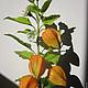 Интерьерные композиции ручной работы. Заказать Оранжевый привет в цветках физалиса..... Landora (Galitn). Ярмарка Мастеров. Цветы ручной работы