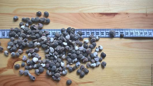 Аппликации, вставки, отделка ручной работы. Ярмарка Мастеров - ручная работа. Купить ВРЕМЕННО НЕТ В НАЛИЧИИ Ракушки морские (03-046)(2) Умбониум чёрный. Handmade.