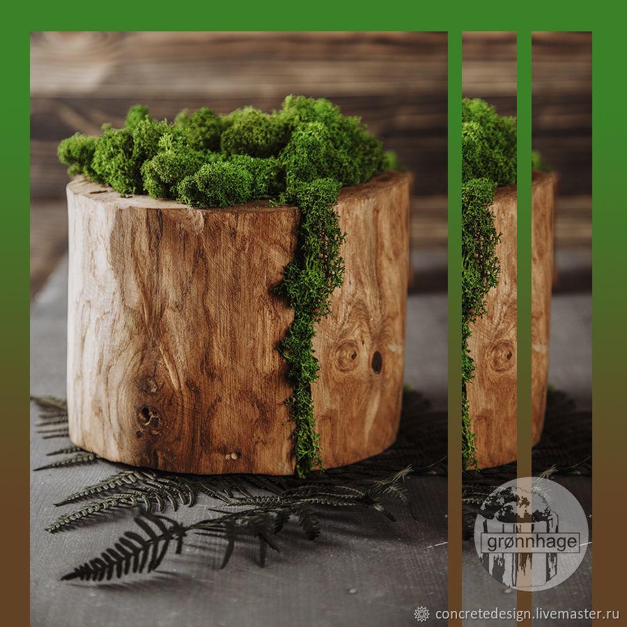 Moss in pots, Pots1, Belgorod,  Фото №1