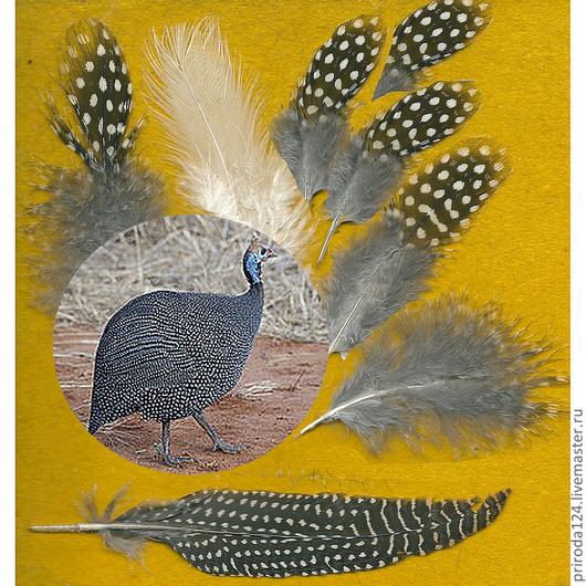 """Другие виды рукоделия ручной работы. Ярмарка Мастеров - ручная работа. Купить Перья птицы """"Цесарка"""" ( чёрная и белая). Handmade."""