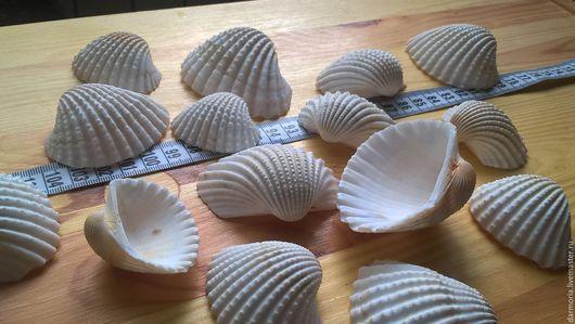 Аппликации, вставки, отделка ручной работы. Ярмарка Мастеров - ручная работа. Купить Ракушки морские (05-139) Анадара Бразилиана большая. Handmade.
