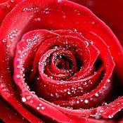 Материалы для творчества ручной работы. Ярмарка Мастеров - ручная работа Гидролат розы. Handmade.