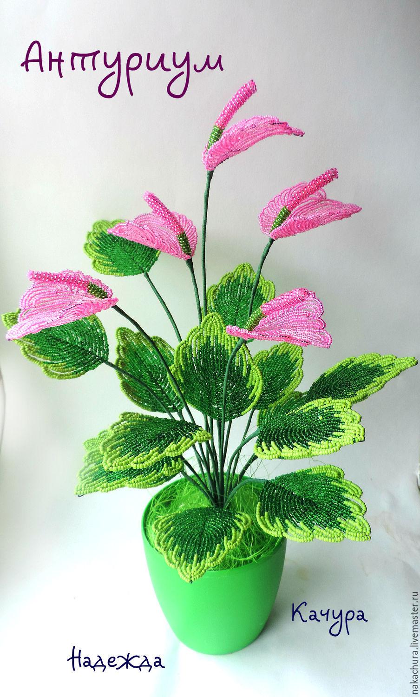 антуриум комнатный цветок фото