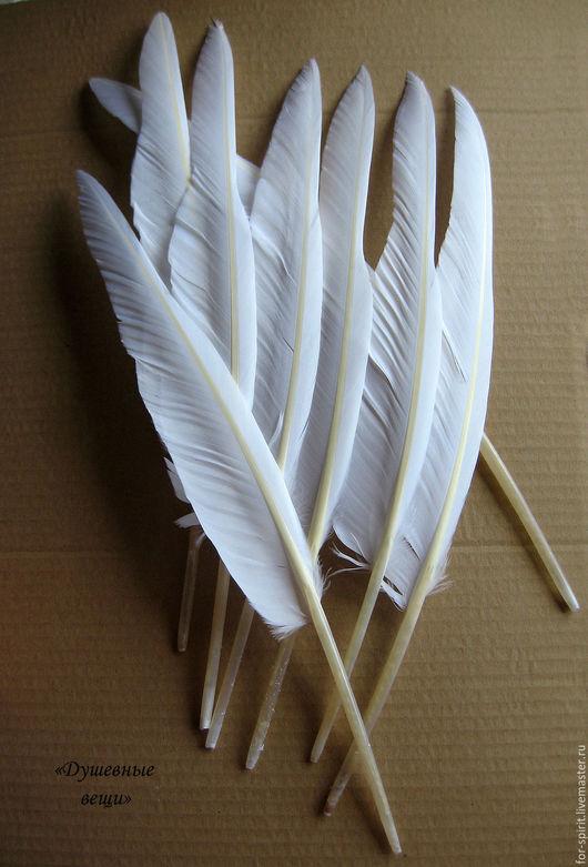 Другие виды рукоделия ручной работы. Ярмарка Мастеров - ручная работа. Купить Перья гуся длинные (34-40 см). Handmade.
