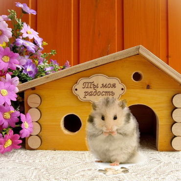 Для домашних животных, ручной работы. Ярмарка Мастеров - ручная работа Домик для хомяка. Handmade.