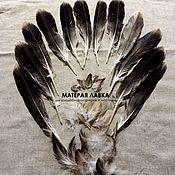 Оберег ручной работы. Ярмарка Мастеров - ручная работа Перья орла с хвоста, шеи, спины и лап. Handmade.