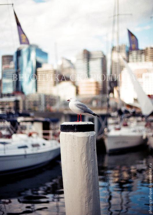"""Фотокартины ручной работы. Ярмарка Мастеров - ручная работа. Купить Фотокартина """"Чайка"""". Handmade. Фотография, птица, море, Австралия"""