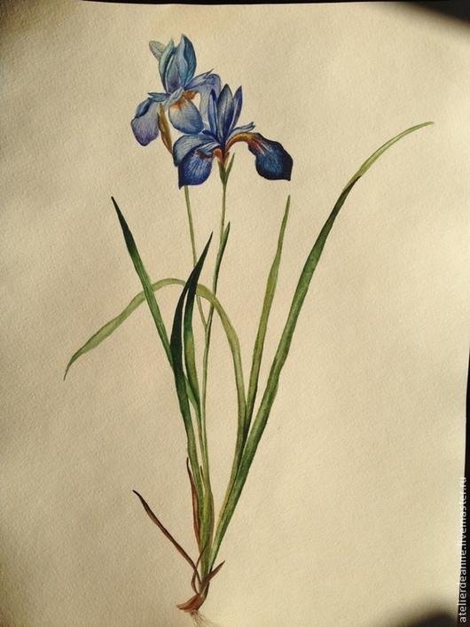 Акварельная ботаническая миниатюра Ирисы