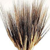 Материалы для творчества ручной работы. Ярмарка Мастеров - ручная работа Пшеница двухцветная Италия. Handmade.