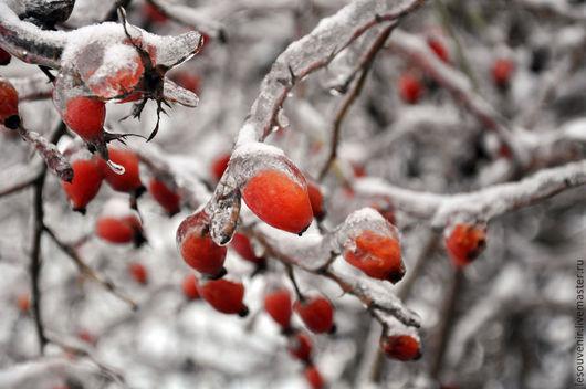 Фотокартина `Зимний шиповник` @Алиса Солнцева