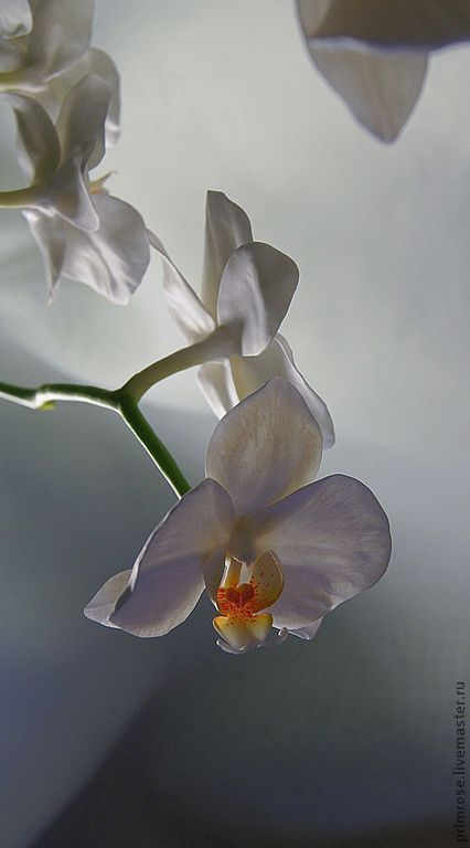 """Интерьерные композиции ручной работы. Ярмарка Мастеров - ручная работа. Купить композиция """"белые орхидеи"""". Handmade. Орхидеи, подарок"""