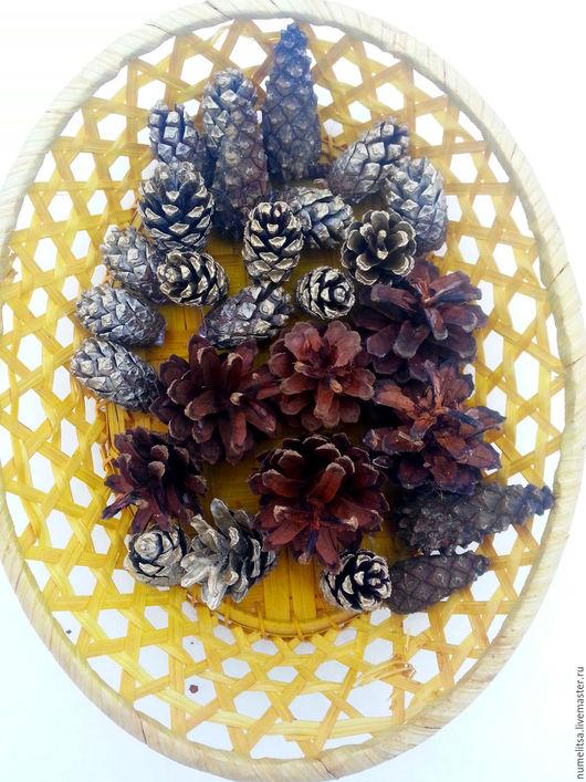 Деревья ручной работы. Ярмарка Мастеров - ручная работа. Купить Шишки сосновые натуральные, окрашенные. Handmade. Коричневый, сосновые шишки