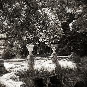 Картины и панно ручной работы. Ярмарка Мастеров - ручная работа Черно белая картина природа, Пейзаж фото «Новый день старого парка». Handmade.