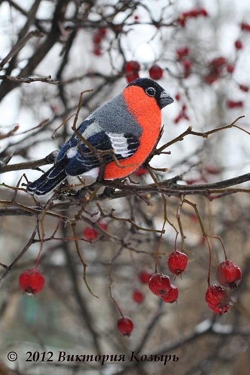 птичка зима фото