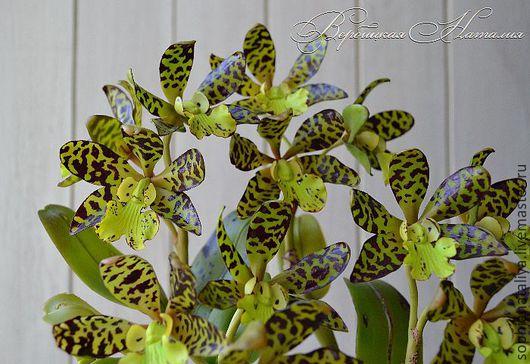 Цветы ручной работы. Ярмарка Мастеров - ручная работа. Купить орхидея из глины , холодный фарфор Каттлея экзотическая. Handmade. каттлея