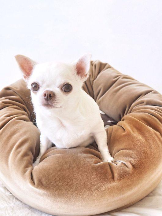 Аксессуары для собак, ручной работы. Ярмарка Мастеров - ручная работа. Купить Пуфик Велюр Какао. Handmade. Чихуахуа, лежанка, пуф