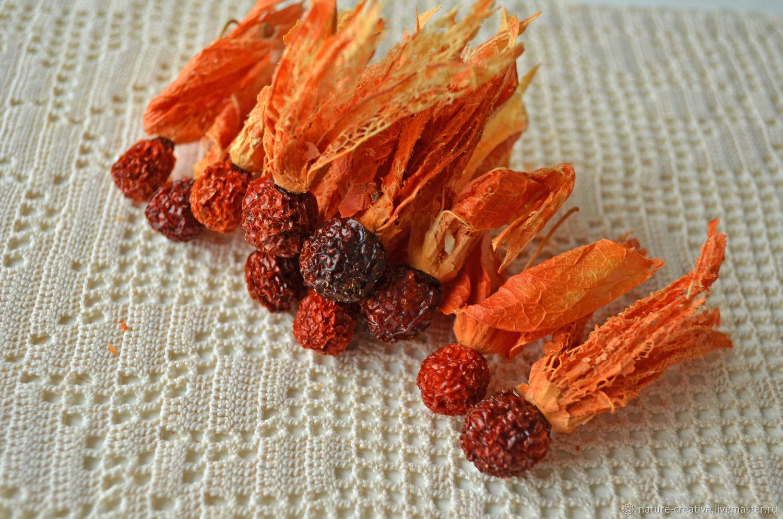 Ягоды физалиса сушеные 10 штук в наборе, Сухоцветы, Рязань, Фото №1