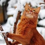 Солнечный Кот - Ярмарка Мастеров - ручная работа, handmade