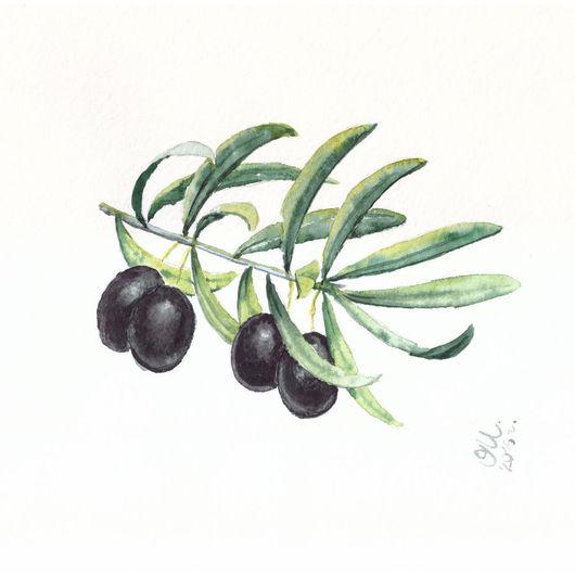 Акварельная веточка оливкового дерева. Сердиземноморская греческая олива.