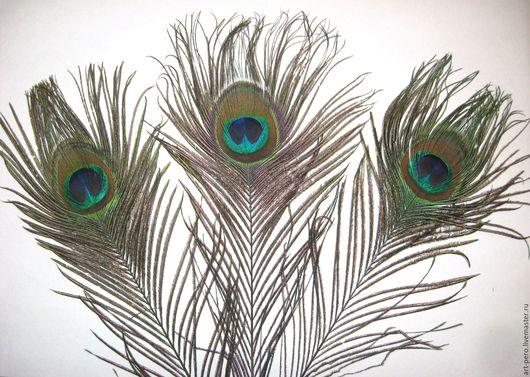 Другие виды рукоделия ручной работы. Ярмарка Мастеров - ручная работа. Купить Перья павлина с КРУПНЫМ глазком декоративные, натурального цвета. Handmade.